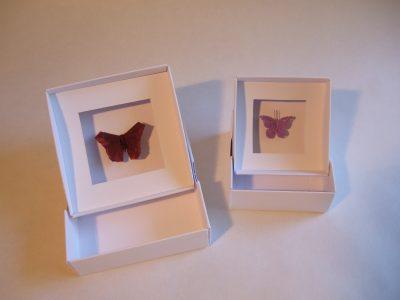 Schmetterlinge mit Schachtel